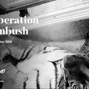 Key Findings: Operation Ambush