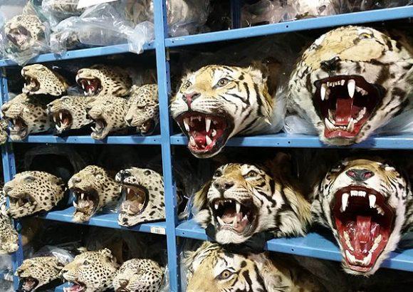 Facebook Is a Black Market For Vietnam's Wildlife Traffickers
