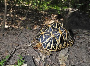 International Turtle Day