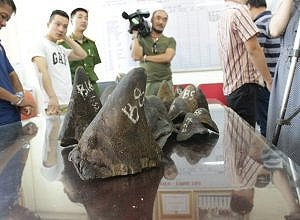 A collaboration between Education for Nature – Vietnam, the National Environmental Police and WJC resulted in one arrest and the seizure of eighteen rhino horn