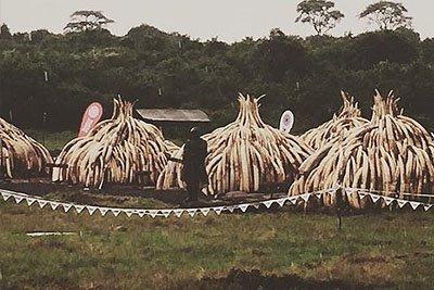Nairobi: Kenya Ivory Burn