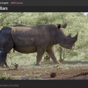 Watch Rhino Dollars online at ARTE.tv