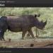 Watch Rhino Dollars online at ARTE.tv