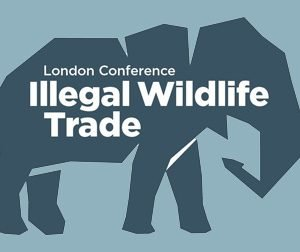 Corruption and illegal wildlife trade: how to tackle it