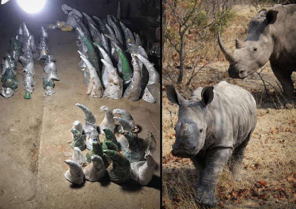 Briefing Paper: A Preliminary Analysis of Raw Rhino Horn Prices in Africa and Asia