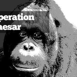 Operation Caesar