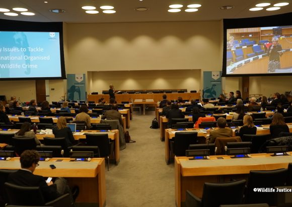 Building anti-corruption measures into IWT interventions: Event at the UN HQ