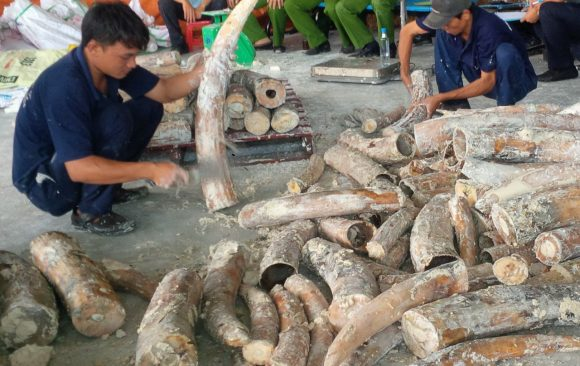 Analysis: Current data shows significant changes in dynamics of ivory trafficking