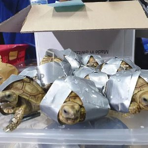 Feds Lie in Wait 3 Years for Accused Turtle Trafficker
