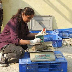 Indian turtles disappearing due to international illegal trade