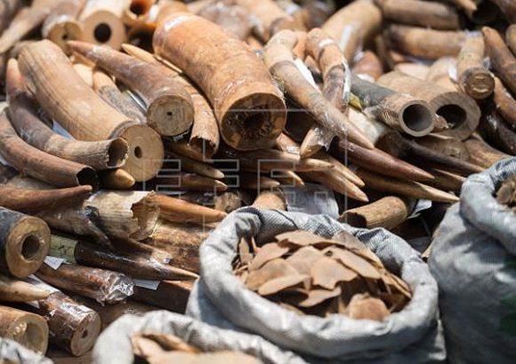 La pandemia dificulta pero no paraliza el tráfico de especies, denuncia Wildlife Justice