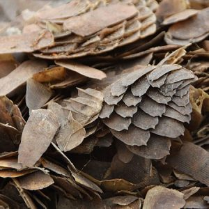 As pangolin trade heats up, Nigeria urged to do more to crack down