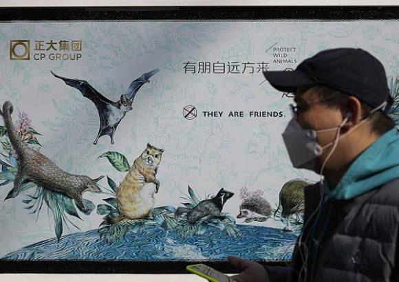 Coronavirus: what next for China's wildlife trade ban?