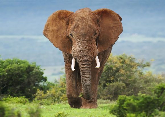 World Elephant Day: No room for complacency in the fight against ivory trafficking