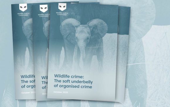 Wildlife crime: the soft underbelly of organised crime