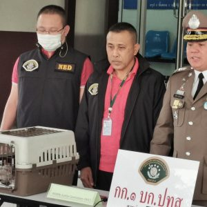 Joint operation with Thai and US law enforcement agencies leads to the arrest of suspected high-level wildlife trafficker