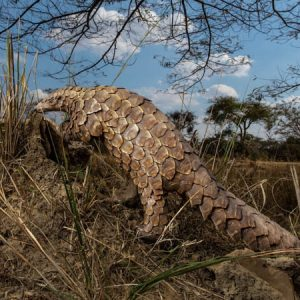 Wildlife seizures are down—and an illicit trade boom may be coming