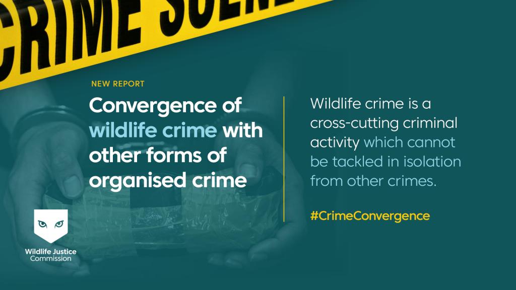 Crime Convergence