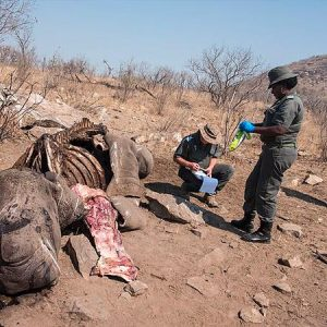 De jacht op stropers in Afrika vereist een speciale aanpak, bewijst de ondergang van de Kromah-bende