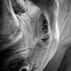 Multi-disciplinary operation by the South African Police Service leads to the arrest of suspected rhino horn traffickers