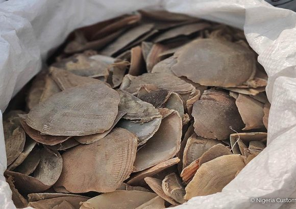 Joint operation with Nigeria Customs Service leads to three arrests, seizure of 7.1 tonnes of pangolin scales and 870 kg of ivory