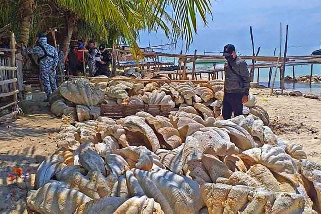 Fisheries crime - giant clam shells seized