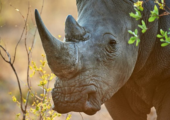 The Wildlife Justice Commission partners with Arcadia to disrupt and dismantle transnational wildlife crime